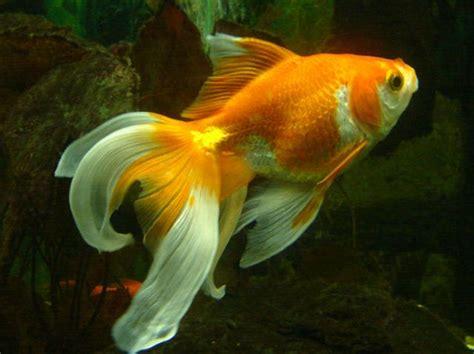 alimentazione pesci acquario alimentazione