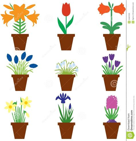 images of 6 flowers in pots set bulbs flowers in pots stock vector image of flora 34687933