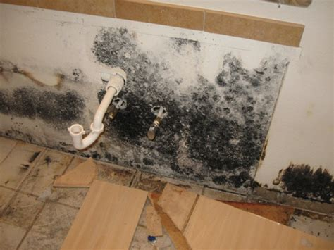black mold sink cleaning black mold steps products to use precautions