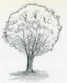 free coloring pages of how to draw a tree