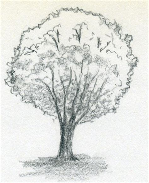 simple drawing tree draw a tree simply and easily
