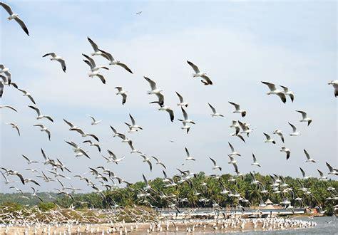 kadalundi bird sanctuary wikipedia