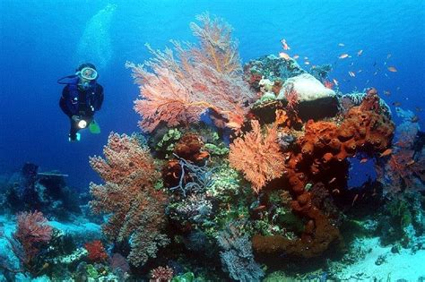 dive holidays bali scuba diving holidays with sportif dive holidays