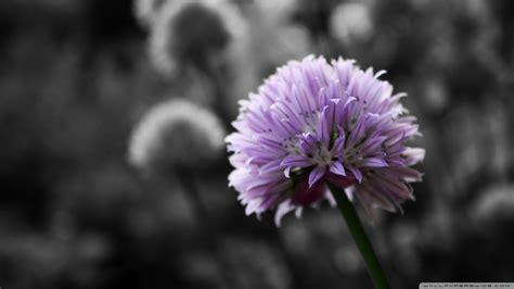 desktop wallpaper black and white flowers black and white flowers wallpaper 1920x1080 51489