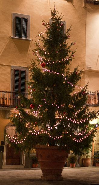 how to keep your christmas tree alive until next year