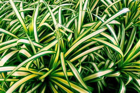 ikea krydda vaxer usa 29 best indoor plants low tall indoor plants cepagolf 29