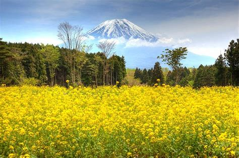 most beautiful places in the us mount fuji japan 20 most mount fuji japan beautiful places to visit