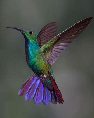 Hummingbird Crib Bedding 25 B 228 Sta Kolibrir Id 233 Erna P 229 Kolibri F 229 Glar Och F 228 Rgglada F 229 Glar