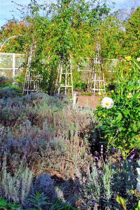 My Flower Garden The Praying Mantises In My Flower Garden The Martha Stewart