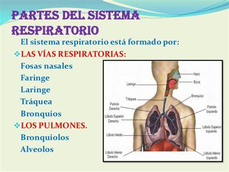 imagenes del sistema respiratorio ingles diapositivas del sistema respiratorio