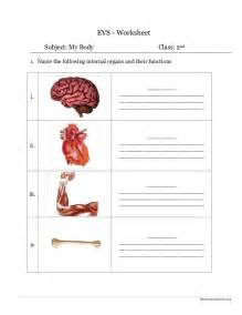 environmental science evs body parts worksheet class ii