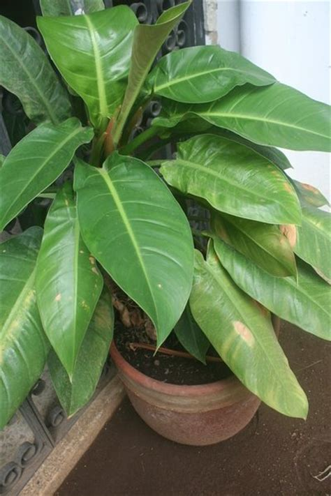 house plant identification tropical house plants images frompo