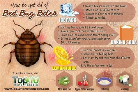 bed bug itch relief how to get rid of bed bug bites top 10 home remedies