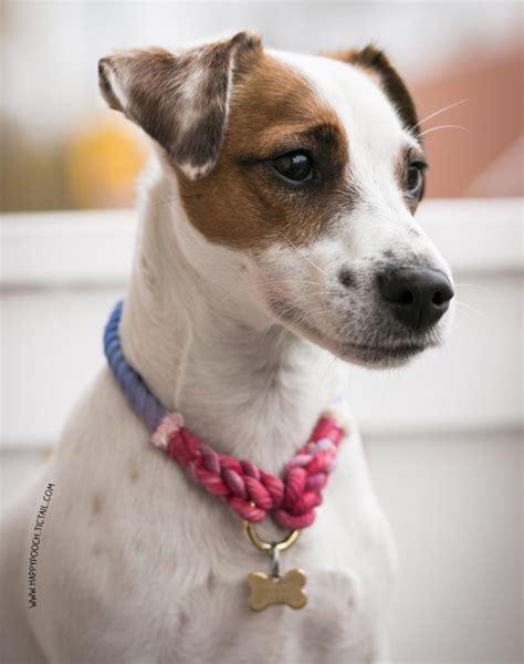 Handmade Collars And Leads - happy pooch handmade leads collars apparel 7 milk
