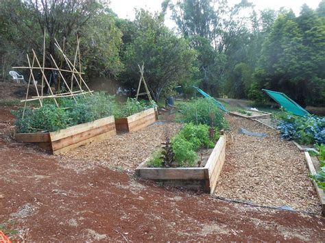 vegetable beds add more green crystal greens