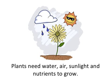 plants that need sunlight basic needs of plants