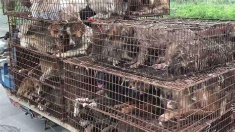 yulin festival 2017 verg 220 enza mundial el festival de carne de perro de yulin da comienzo a pesar de