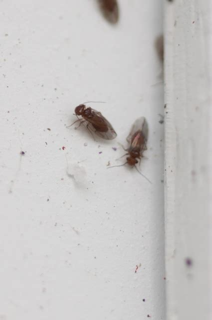 small flies in my bathroom red flies in bedroom www indiepedia org
