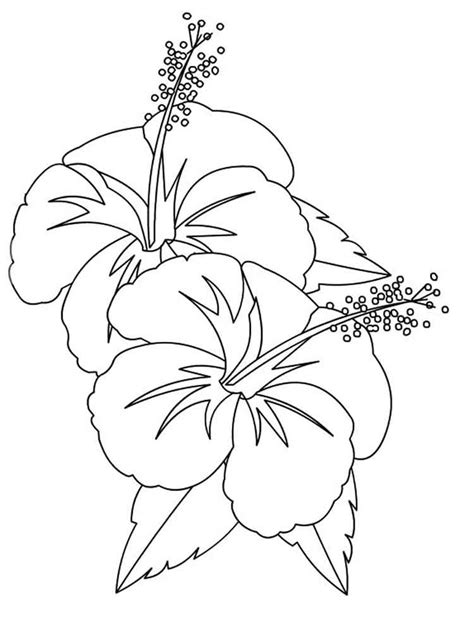 hibiscus flower coloring pages hibiscus flower coloring page coloring home