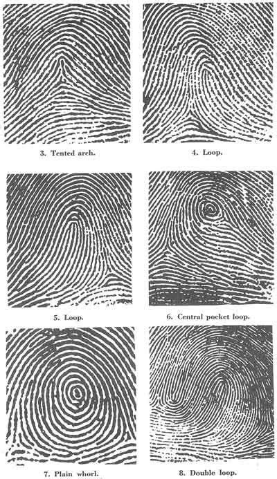 pattern classifiers definition the project gutenberg ebook of the science of fingerprints