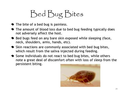 how do bed bugs form how do bed bugs form bedbugslicescabiesohmy