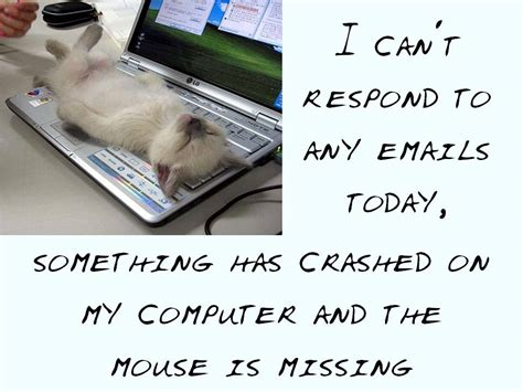 I vote for cats in the workplace   360Jokes