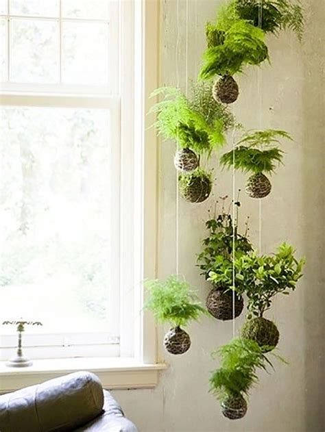 low light hanging plants 15 gorgeous ways to decorate with plants string garden
