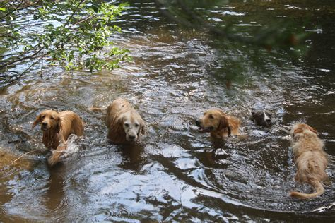 puppies in water pin in the house k9 our dogs needing homes on