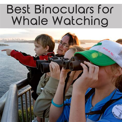 best binoculars for sports and events 2017 picks