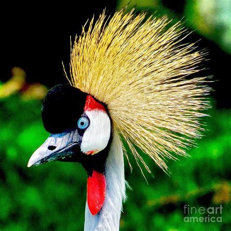 big colorful bird colorful bird photograph by nick zelinsky