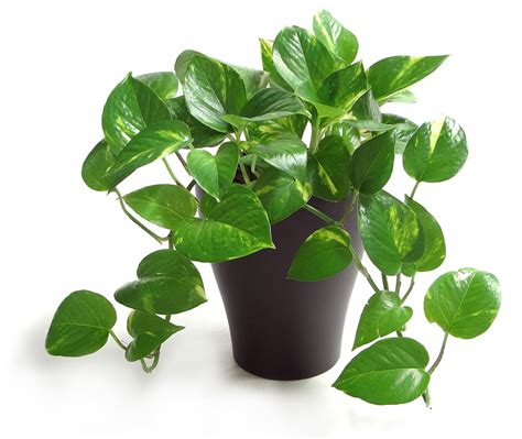 most popular houseplants costa farms