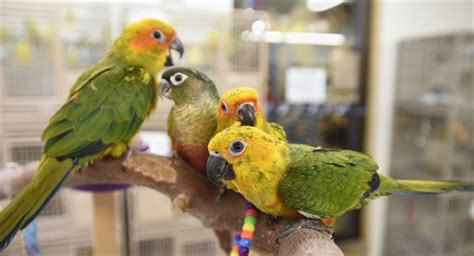 bird lovers flock together at pet store therecord com