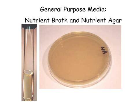 Media Mikroba Nutrient Agar Biolife ppt lab exercise 2 powerpoint presentation id 687599