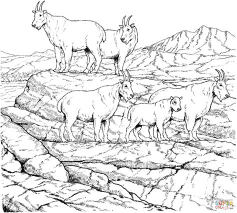 mountain sheep coloring page mountain goat herd coloring page free printable coloring