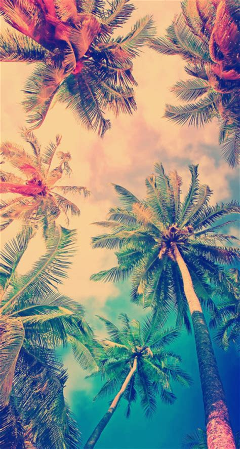 palm tree wallpaper trending tumblr