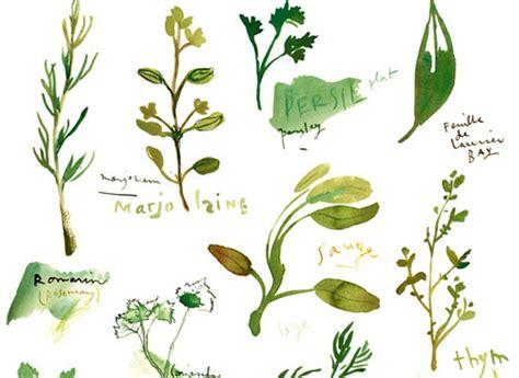 Herbes Aromatiques Cuisine Liste by Liste Des Herbes Aromatiques En Cuisine Fleur De