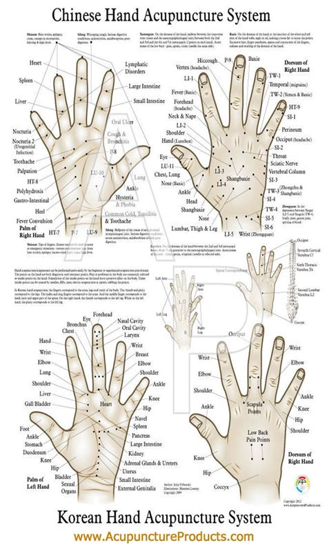 pressure point diagram 16 best reflexology charts images on