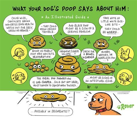 what to do if your dog poops in the house what to do with dog poop in your backyard an illustrated guide to dog poop rover com