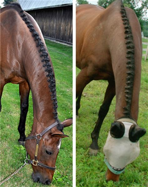 cute hairstyles for horses braiding wire for horse hair by twisteezwire