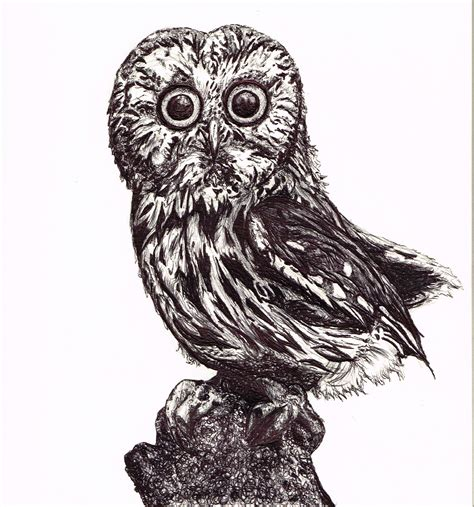 owl bird drawing archives pencil drawing collection