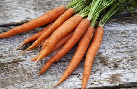 grow carrots   home garden