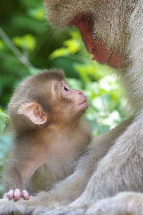 Best 20  Monkey pictures ideas on Pinterest   Funny monkey