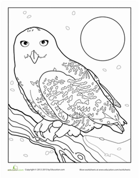 snowy owl worksheet education com