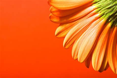 free beautiful powerpoint templates free powerpoint backgrounds beautiful orange flower design