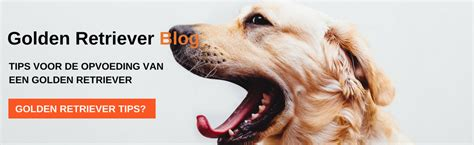golden retriever techniques golden retriever ras ontdek dit lieve en veelzijdige hondenras
