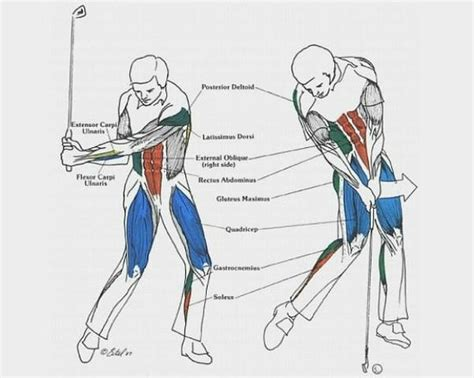 biomechanics of golf swing biomechanics of your body during a golf swing picture of