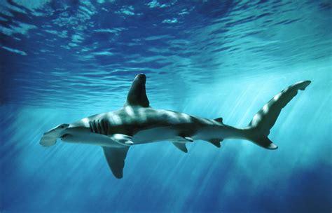 baby shark background baby shark pinkfong wallpapers wallpapersafari