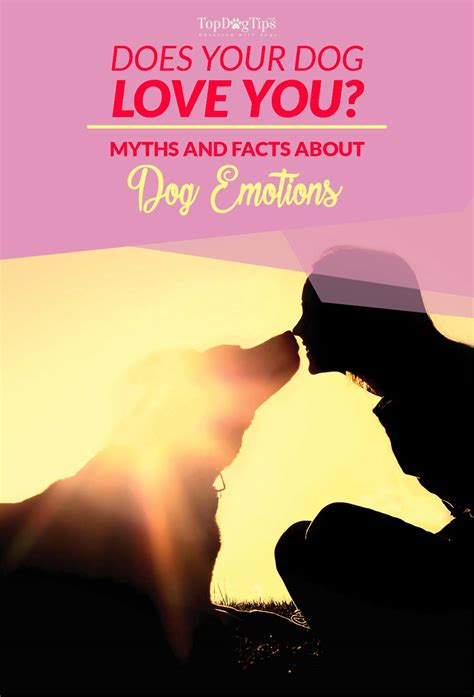 does my puppy me does my me myths and facts about emotions