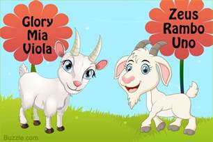 cute male and female pet goat names you ll surely love