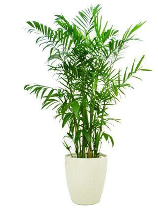 top  air purifying house plants rainharvestcoza